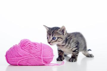 Gatito observando ovillo de lana fucsia