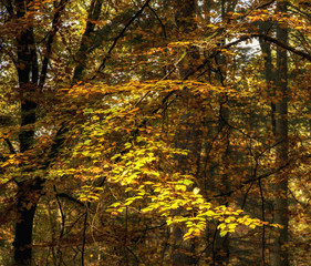 Beautiful vibrant Autumn landscape forest countryside in morning