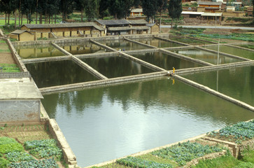 Aquaculture fish ponds in Kunming, People's Republic of China