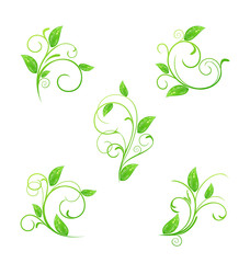 Set green floral elements with eco leaves isolated