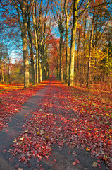 Road in autumn in the forest