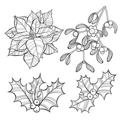 Set of  Christmas flowers  isolated on white background. Hand-drawn vector illustration