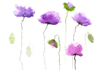 Modern violet poppy flowers, watercolor painting