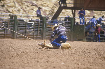 Calf roping competition, Inter-Tribal Ceremonial Indian Rodeo, Gallup NM