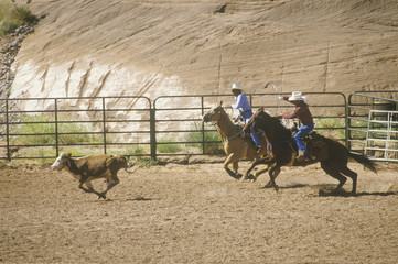 Calf roping, Inter-Tribal Ceremonial Indian Rodeo, Gallup NM