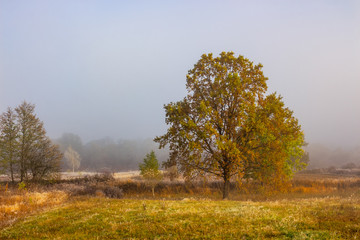 autumn landscape. yellow trees in fog on the meadow