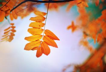 Fototapeta jesień w polsce obraz