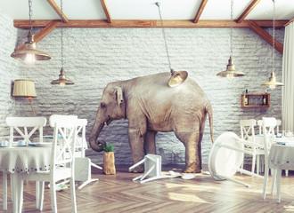 elephant calm in a restaurant interior