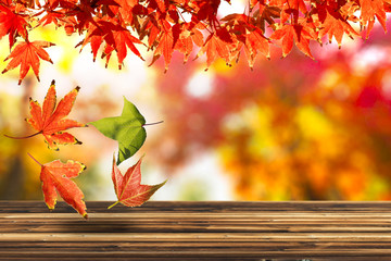 Autumn Scene Background