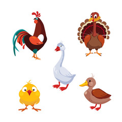 Poultry Domestic Birds, Vector Illustration Set