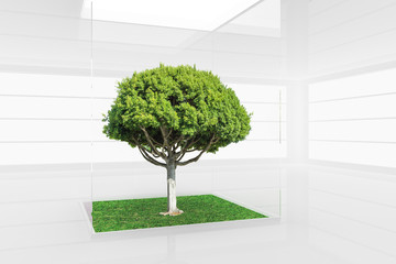 Bright green tree in the center of modern empty space