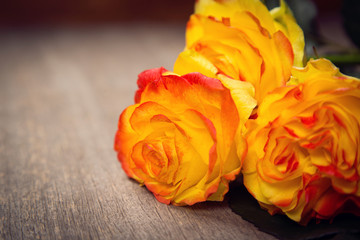 beauty roses in studio