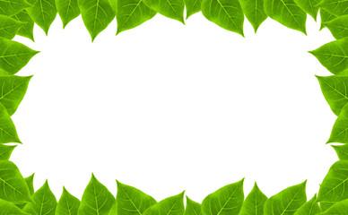 green leaves frame