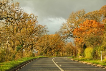 Tall trees of fall colors between long road on country side drive