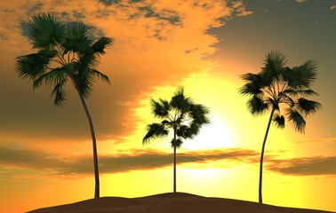 tropical palm trees against the sky with the sun and clouds