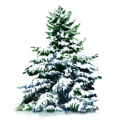 Christmas tree covered snow in winter, isolated