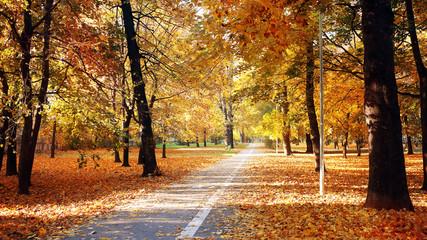 autumn wood with sun rays