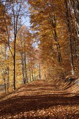 autumn forest alley