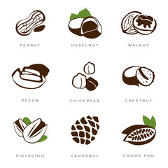 Nuts, Beans and Seed Vector