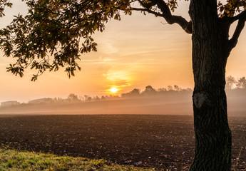 Sonnenaufgang im Nebelschleier