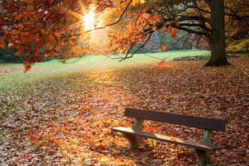 Autumn. Fall. Autumn park. Autumn trees and leaves