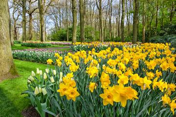 Fototapete - Spring Flowers in dutch Garden Keukenhof, Lisse, Netherlands