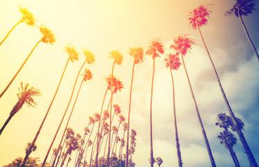 Retro stylized palms at sunset, Santa Monica, USA.