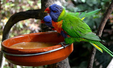 Parrots living  in tropical forest in Loro Parque. Tenerife,Canary Islands.