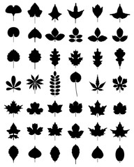 Black silhouettes of leaves of trees, vector
