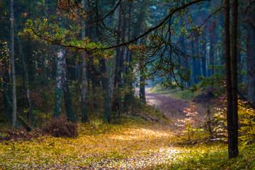 Jesienna leśna droga