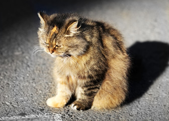 Beautiful sad cat