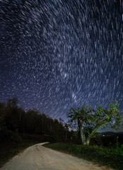 Star trails over the apple orchard in the Blue Ridge Mountains of North Carolina at night.
