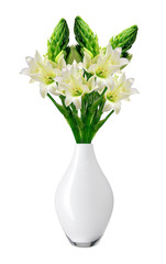 Beautiful white lily in vase isolated on white background