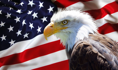 Poster Eagle North American Bald Eagle on american flag