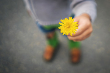 Boy holding a yellow dandelion flower