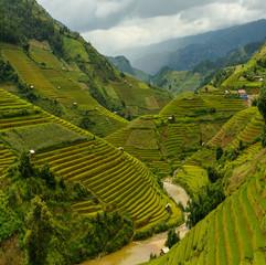 Garden Poster Rice fields Terraced rice field in rice season in Mu Cang Chai, Vietnam