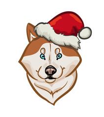 siberian husky holiday portrait