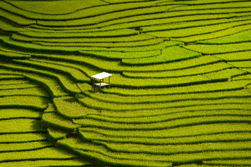Autocollant pour porte Les champs de riz Beautiful landscape Green Terraced Rice Field in Mu cang chai, V