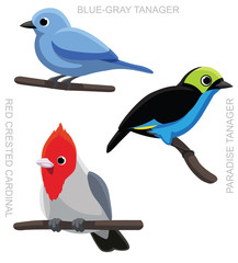 Bird Tanager Cardinal Set Cartoon Vector Illustration 2