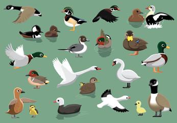 US Ducks Cartoon Vector Illustration