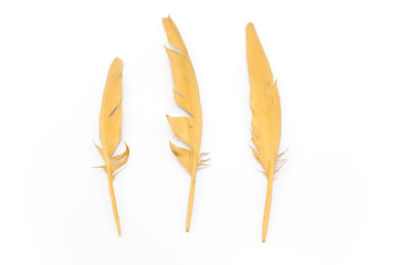 Three gold feathers  isolated on white