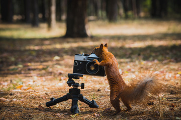 Red squirrel with a film camera
