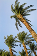 some growing palm trees against the sky