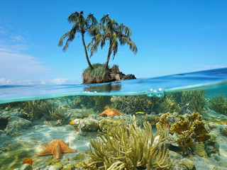Coconut tree islet and coral starfish underwater