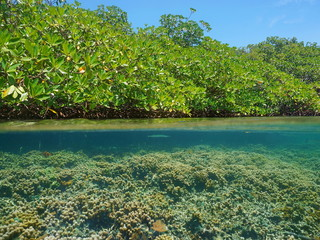 Mangrove over water and coral reef underwater