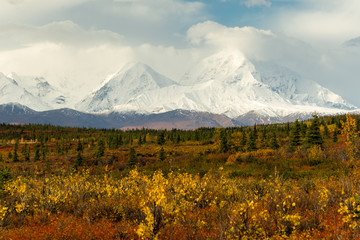 Fototapete - Plants Ground Cover Change Color Alaska Mountains Autumn Season
