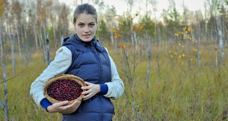 Woman picking ripe cranberies