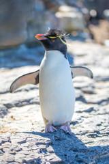 Cute Rockhopper Penguin Portrait