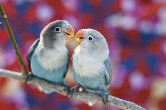 Love birds with colorful background