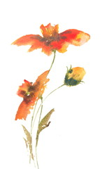 Red wild flowers watercolor painting